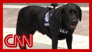Watch Capitol police's newest officer in action