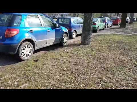 Szczury W Poznaniu W Biały Dzień Ul Rycerska Marcelińska