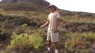 Endemic Galapagos Tomatoes