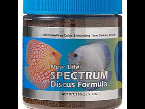 New life spectrum discus fish food for sale mumbai for Discus fish food
