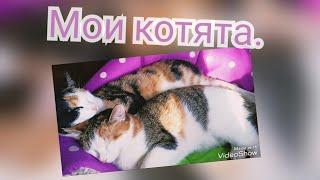 Мои котята. Котята взрослеют.#котята.