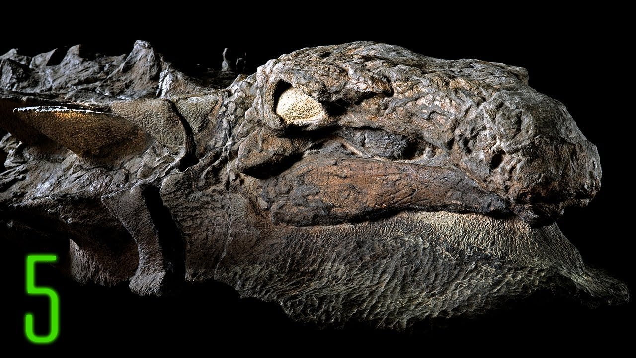 5 New Dinosaur Discoveries that Reveal What They Looked ...