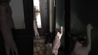 鏡の前でキレッキレのダンスを踊る猫…その後ろではドラムを叩く猫(動画)