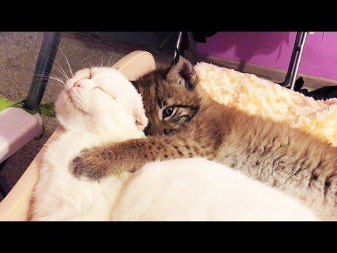 do all kittens scratch furniture
