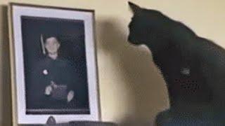 Cat Keeps Staring At Photo, Mom Sets Up Camera
