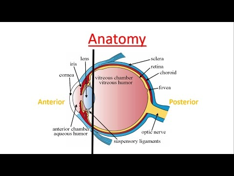 Cataract explained from A to Z