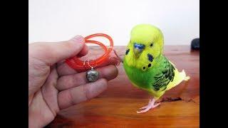 Muhabbet Kuşu Mutlu Etmenin 10 Yolu