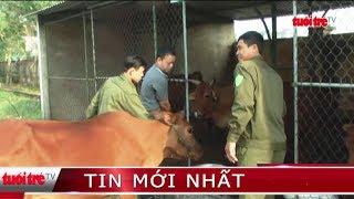 ⚡ Tin mới nhất | Lãnh đạo địa phương chịu trách nhiệm nếu để trâu bò thả rông trên đường