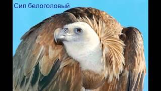 Отряд Дневные хищные птицы
