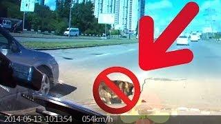 18+ Авария.ДТП.Сбил собаку. ШОК..... Киев.Crash, Car accident