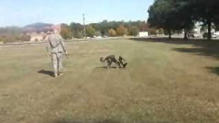 Mwd's - Buried Ied Training Using Scentlogix's Semtex A+h