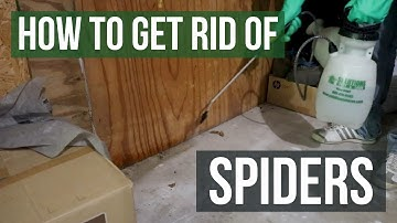 How to Get Rid of Spiders Guaranteed (4 Easy Steps)