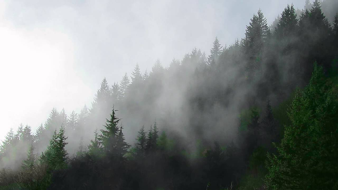 pacific northwest forest - photo #49