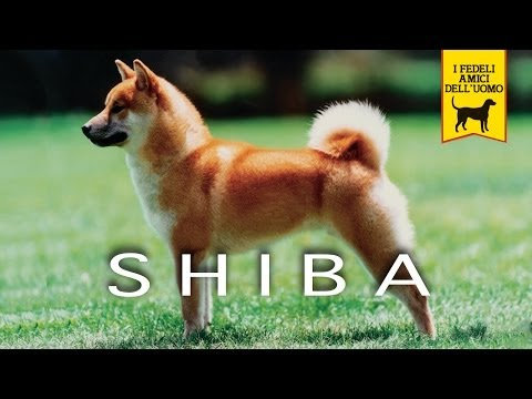 LO SHIBA trailer documentario (razza canina)