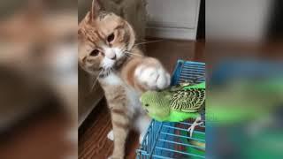 КОТЫ 2019 приколы с кошками и котами другие животные #1 Смешные кошки