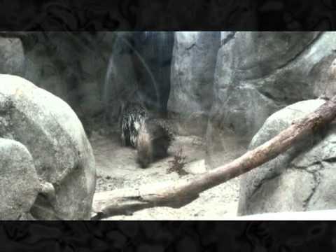 Chapultepec Zoo near Mexico City