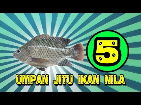 5 Umpan jitu ikan nila liar versi komunitas pencari ikan