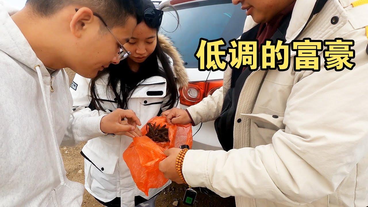 青海一年一度挖虫草,厉害点的一天赚2000,小哥买了5000根