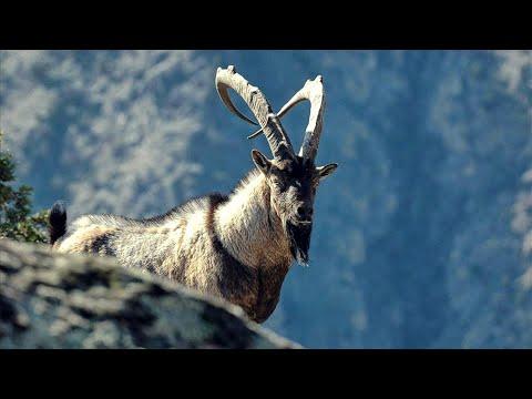 Живые Символы Планеты | Армения | Животные | HD