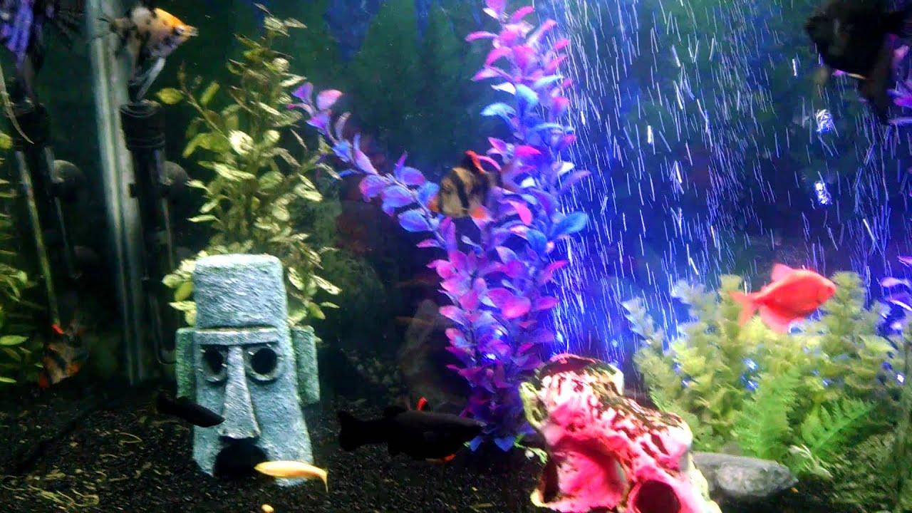 Black sand aquarium youtube for Black sand fish tank