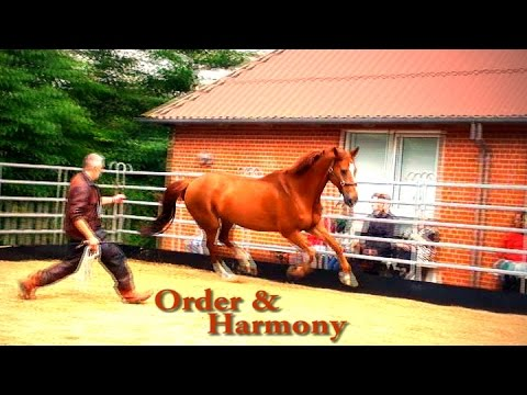 Hempfling - Order & Harmony in Minutes - An Educational Documentary