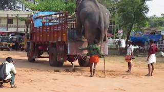 Kerala Tourism Kollam | A Smart Indian Elephant cautiously step down from a High height Lorry.