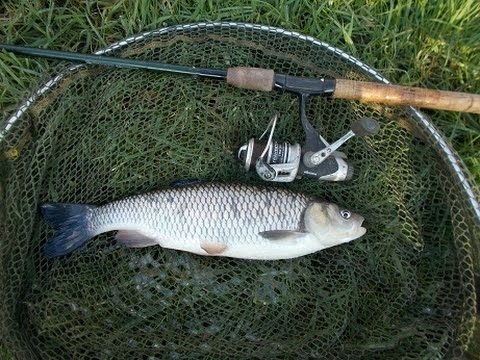 Chub fishing with bread angling chat with a pro for Fishing with bread