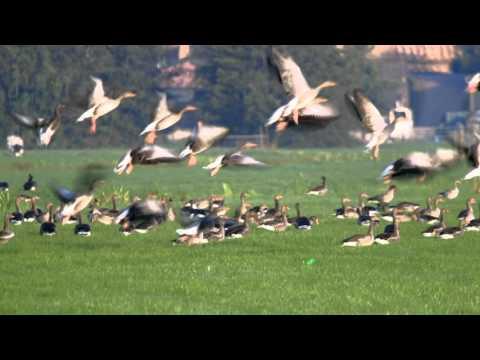 laserpointer zur vogelabwehr