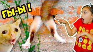 КОТЫ ЛЕТУНЫ! ЛУЧШИЙ НЕ ЗАСМЕЙСЯ ЧЕЛЛЕНДЖ с КОТАМИ ПРЫГ! Funny Cats Попробуй не засмеяться Валеришка