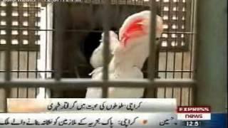 Bird Fancier Karachi