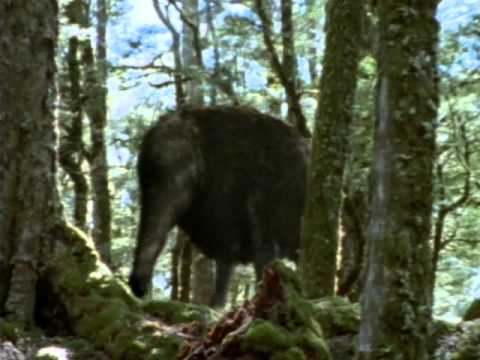 BBC Monsters We Met - 3 of 3 - The End of Eden