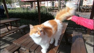 Cat with fluffy tail is so lovely but a little jealous