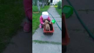 Софийка и её маленькие щенки :-)