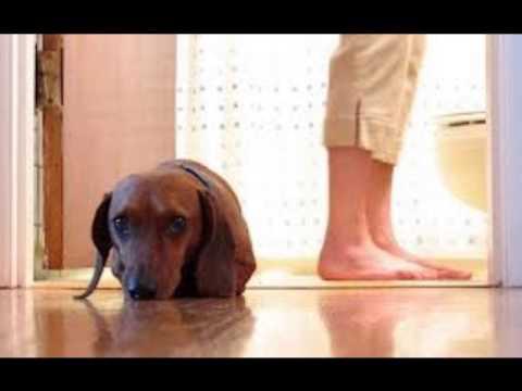 Get Rid Of Dog Urine Odours