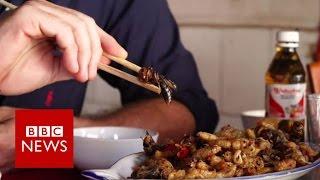 Fried wasp anyone? BBC News