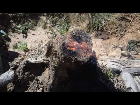 Burning Stumps with Thermite