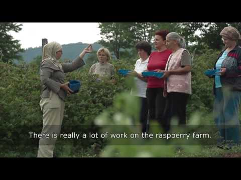 Improving Berry Production in Bosnia and Herzegovina