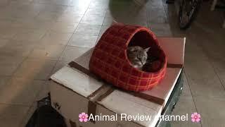 Наконец то кот спит в своём домике