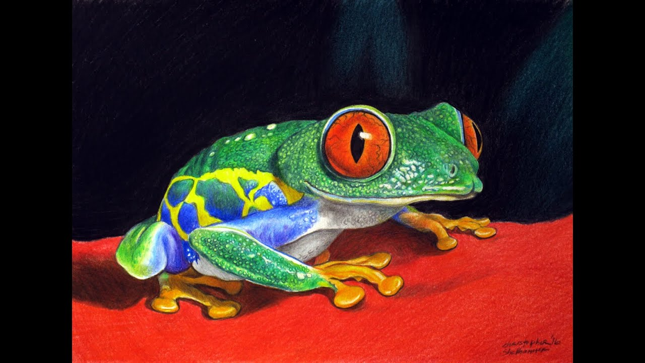 FREE LESSON In How To Draw Realism of Red-Eyed Tree Frog ...
