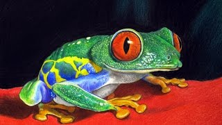 FREE LESSON In How To Draw Realism of Red-Eyed Tree Frog, Time Lapse Drawing by C. Shellhammer