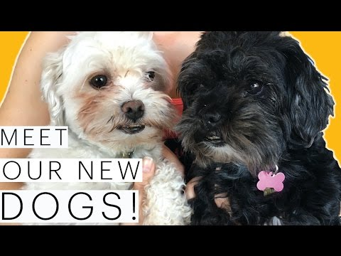 10 Reasons to Adopt a Pet | Meet our dogs! | Our Adoption Story | Rescue Dogs | The Edgy Veg