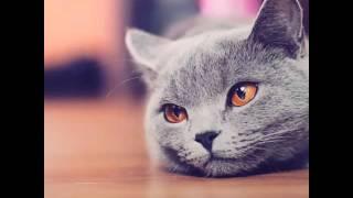 """""""Классные котята"""""""