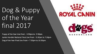 Dogs Queensland Live Stream