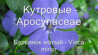 Репетитор латинских названий растений