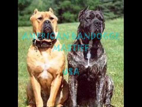 Dog Breeds That Begin With A V