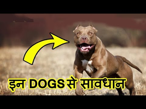 Top 10 MOST Dangerous Dog Breeds in the World (2018)