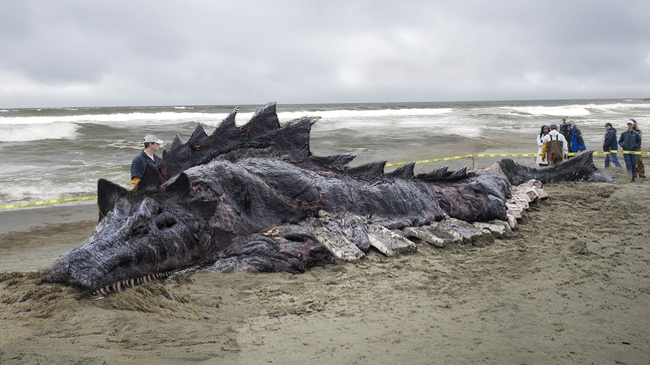 10 Craziest Sea Creatures Recently Discovered!
