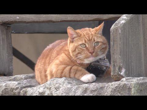 Кот в выборгском замке