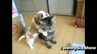 2013 прикольные животные, улетное видео