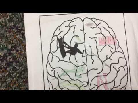 Jacob p2 brain